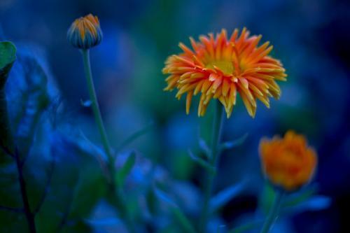 Kwiaty zdjęcie